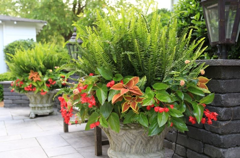 Reasons to Try Container Gardening
